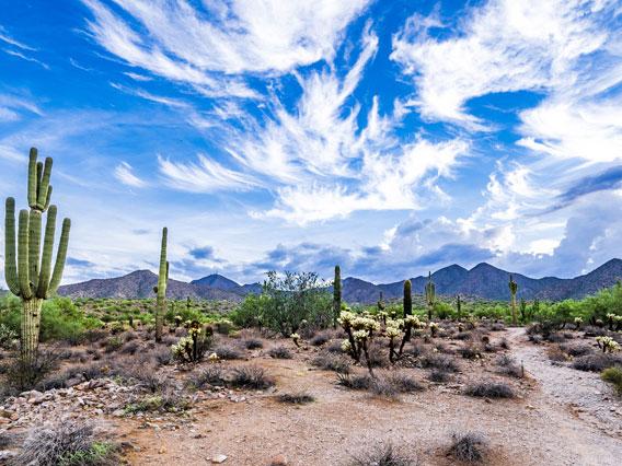 Tucson Mental Health Resources